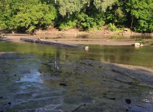В зловонное болото превратился уютный парк в Ростове из-за падения уровня воды