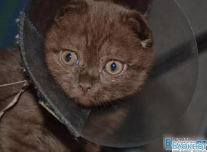 В Волгодонске ветеринары спасают котенка-гермафродита