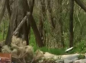 Слабак не дотерпел восемь месяцев и выбросил елку в Ростове