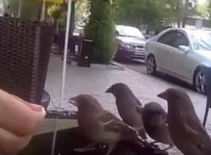 «Дерзкое нападение» банды воробьев на посетителей уличного кафе в Ростове попало на видео