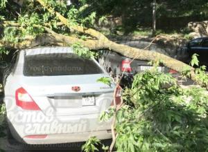Упавшая перед жилым домом огромная ветка повредила два автомобиля в Ростове