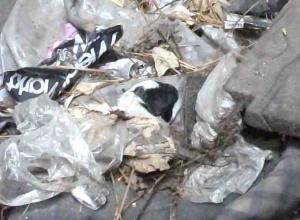 В Ростове живодеры оторвали щенку голову и выбросили на помойку