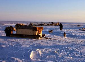Серию преступлений против женщины, строителей и собаки совершил в тундре буйный житель Ростовской области