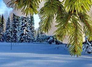 100 шикарных хвойных деревьев появятся на левом берегу Дона в Ростовской области