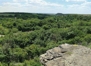 Ликвидировать сразу восемь памятников природы попытались под Ростовом