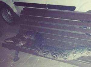 Отдыхающий на лавочке в центре Ростова огромный питон вызвал сложные эмоции у горожан