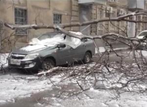 В Ростове из-за сильного ветра дерево упало на автомобиль (ВИДЕО)