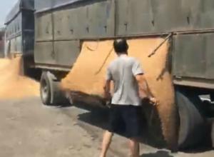 Донские хлеборобы – водитель и полицейский посеяли на трассе под Ростовом тонну пшеницы