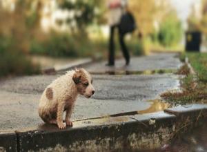 С надеждой на помощь от горожан в Ростове запустили проект по спасению бездомных животных
