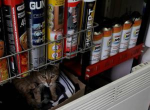 «Живой уголок» с котом в магазине хозтоваров Ростова удивил и обрадовал горожан