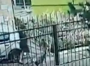 Свирепые дворняги попытались отгрызть ноги женщине во дворе Ростова на видео