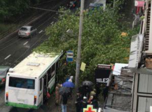 Огромное дерево обрушилось на дожидавшихся автобус людей у остановки в Ростове