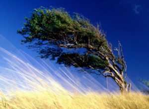 Ураганный ветер и магнитные бури ожидают ростовчан в предстоящие выходные