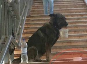 Накаченную наркотиками собаку избивали и заставляли выпрашивать деньги у прохожих в Ростове