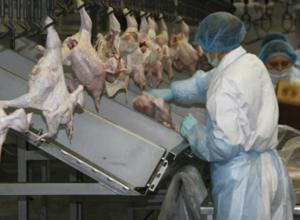 Полмиллиона больных гриппом птиц экстренно уничтожили на фабрике под Ростовом