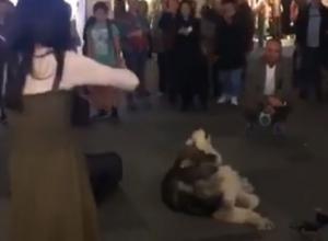 Подпевающая волшебным звукам скрипки хаски в центре Ростова попала на видео