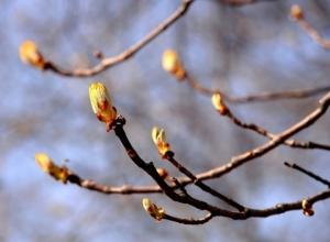 В Ростове в предстоящие выходные потеплеет до +17 °С