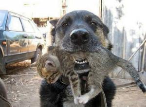 Вернувшаяся домой собака с живым котенком в зубах потрясла своих хозяев в Ростове