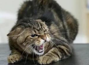 Бешеная кошка покусала и поцарапала 22-летнего дончанина