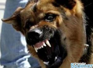 В центре Волгодонска собака откусила мужчине палец