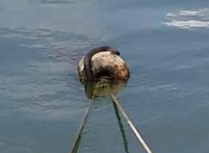 Огромная «жирная» змея «захватила» растерянных рыбаков в Ростове и вызвала умиление у горожан
