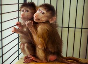 Отобранные у контрабандистов белые кенгуру и веселые обезьяны из Украины оказались в Ростовском зоопарке