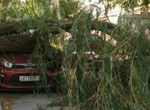 Обрушившаяся под напором сильного ветра старая ива раздавила автомобиль во дворе Ростова