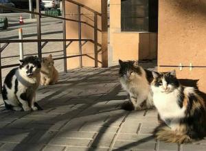 «Толстопузая банда» возле мясного магазина на Майской улице развеселила ростовчан