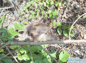 В Ростовской области живодеры зарубили топором двух собак