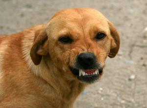 Агрессивная бродячая собака попыталась отгрызть руку прохожему в Ростове