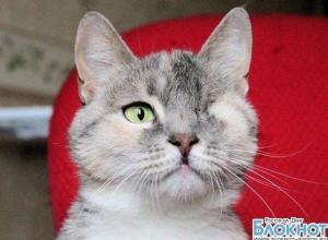 В Ростове ветеринары спасли кошку, удалив ей глаз