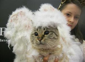 В Ростове на конкурсе кошачьего костюма победила беспородная четвероногая красавица Мишель