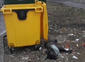 Труп собаки в Ростовской области шокировал детей и вызвал негодование мужчины