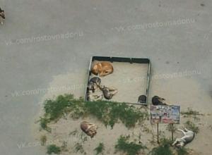 Бродячие собаки не впускают ростовских детей на детскую площадку