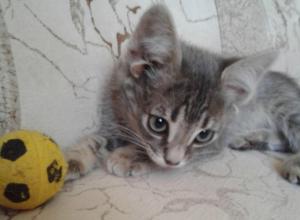 Уникальный котенок с пятью ушами родился в Ростовской области