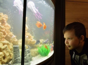 Владимир Путин исполнил мечту ростовского второклассника и подарил аквариум
