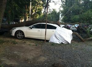 В Ростове дерево рухнуло на припаркованную на стоянке иномарку