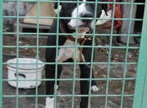 В Ростове зоозащитники подали в суд на Центр безнадзорных животных