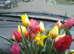 Ради эффектной фотографии единороссы нарвали краснокнижных цветов в Ростовской области