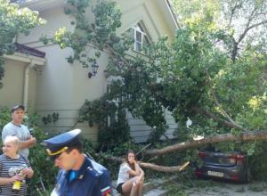 Оторвавшимся от корней огромным старым деревом изуродовало пять автомобилей в Ростове