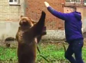 Выгуливающий медведя без намордника мужчина в Таганроге попал на видео и встревожил полицию
