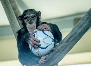 Ростовский зоопарк призывает отдать им футбольные мячи и получить подарки