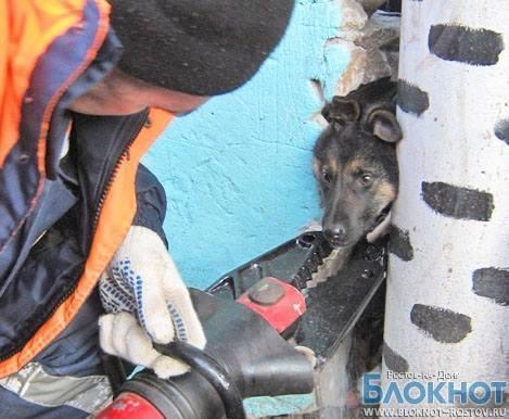 В Ростовской области спасатели освободили щенка, застрявшего в заборе