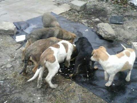 Ростовские волонтеры просят о помощи в спасении от гибели беззащитных собак
