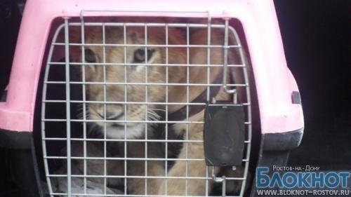 Замдиректора Ростовского зоопарка попалась на взятке при продаже львенка
