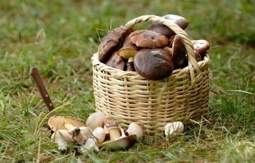 Ототравления грибами вреанимации ростовской клиники скончался ребенок