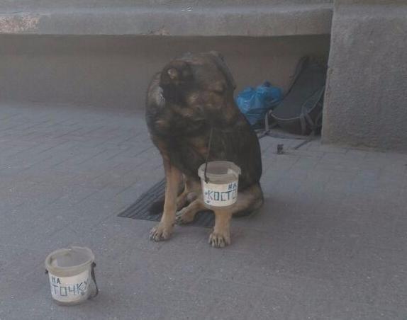 В Ростове собаку просить милостыню заставляют хозяева