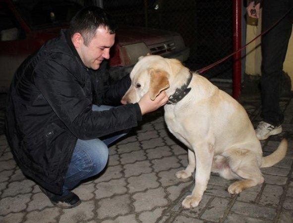 В Ростове хозяева нашли потерявшегося лабрадора спустя полтора года