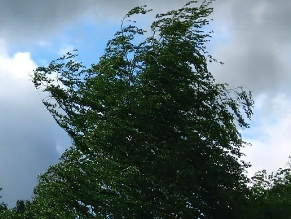 В Ростовской области ураганный ветер может привести к возникновению чрезвычайных ситуаций