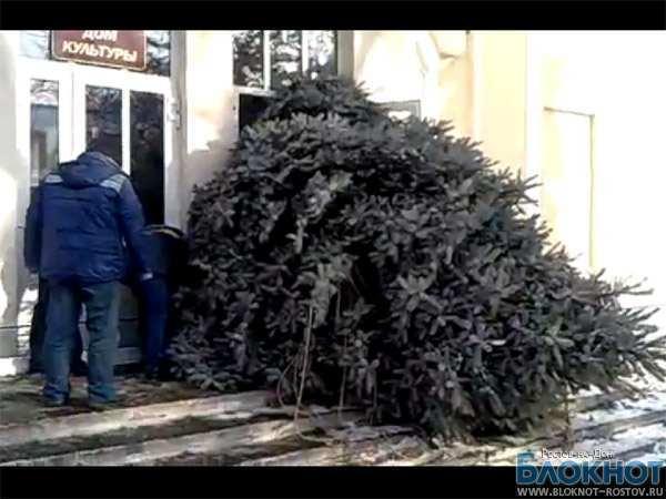 Новогодняя елка из Таганрога, застрявшая в дверях ДК, стала хитом Интернета